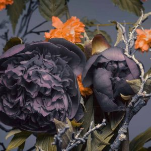 پوستر دیواری گل تیره